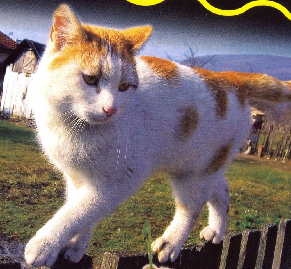 Hipoteca de un mileurista enero 2011 por ejemplo un gato puede alcanzar los 45 kmh en plena carrera pero sobre cortas distancias puesto que se fatiga con facilidad fandeluxe Images