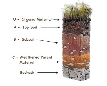 Thoughtful jack fun facts about soil for Information about different types of soil