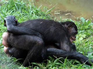 image Bonobo squeeze that thing