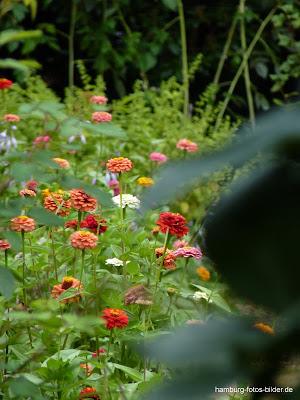 Neuer Botanischer Garten, Hamburg, Blumen