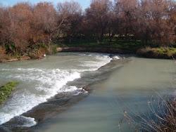 Río Guadajoz (Albendín, CORDOBA)