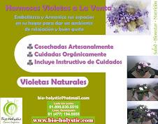 Violetas Naturales