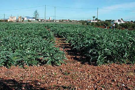 Lagatera las innovaciones de la agricultura ecol gica for Que es la asociacion de cultivos