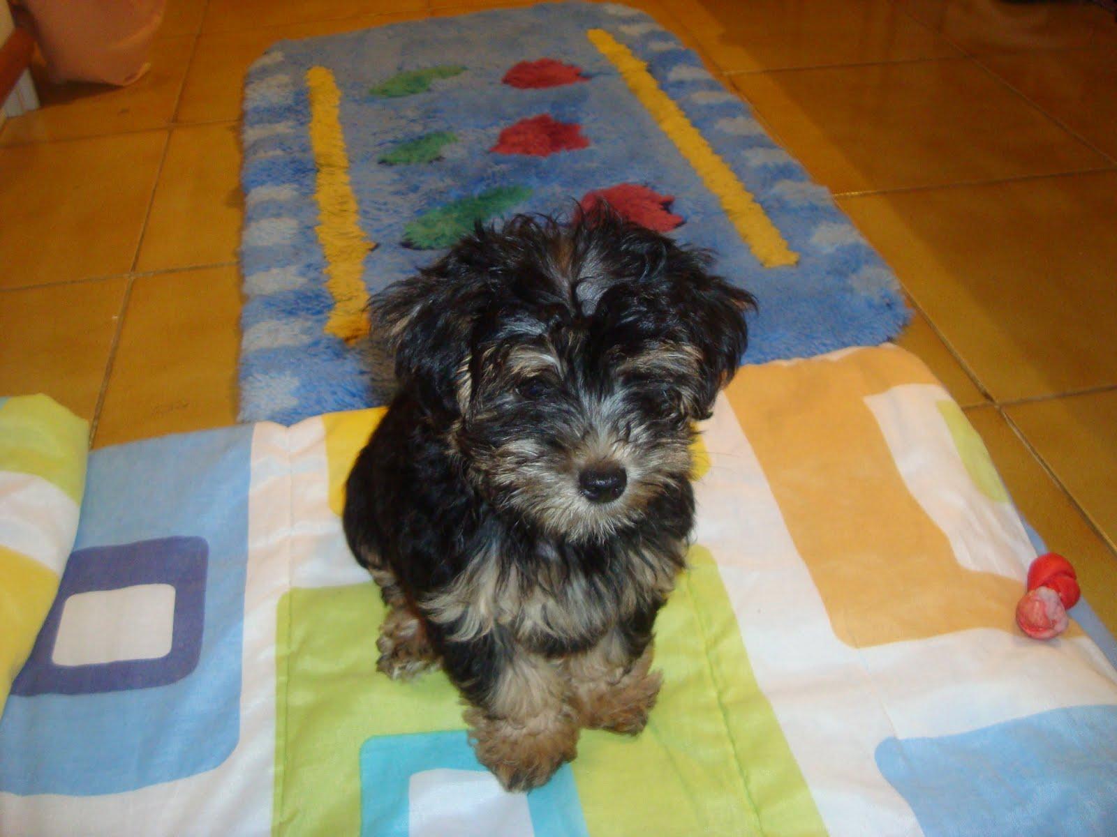 Lu Estética: Curiosidades sobre os cães #773D08 1600x1200 Banheiro Cachorro Grama