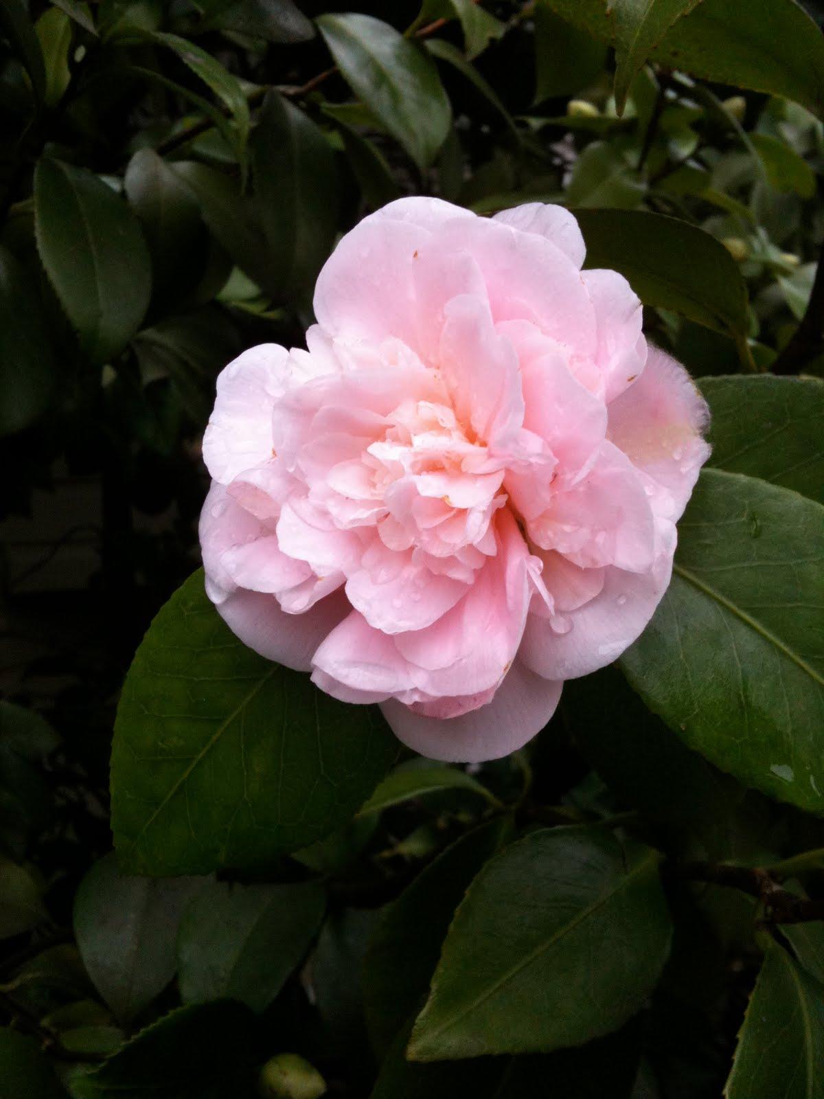 [Backally+Flower.JPG]