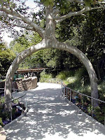 Amazing Trees - Unusual Trees from around the World