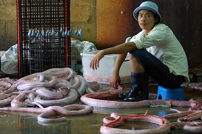 Handbags Manufacturing Process By Snakes, Crocodail's And Other Animals Lather's