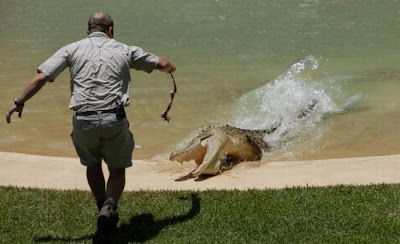 How To Feed Crocodiles