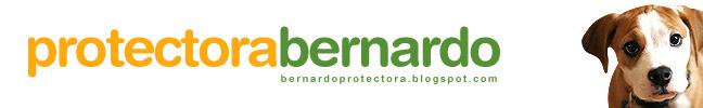 Protectora Bernardo