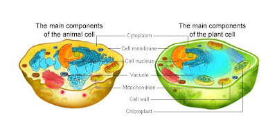 Plant Cell Vacuole Diagram