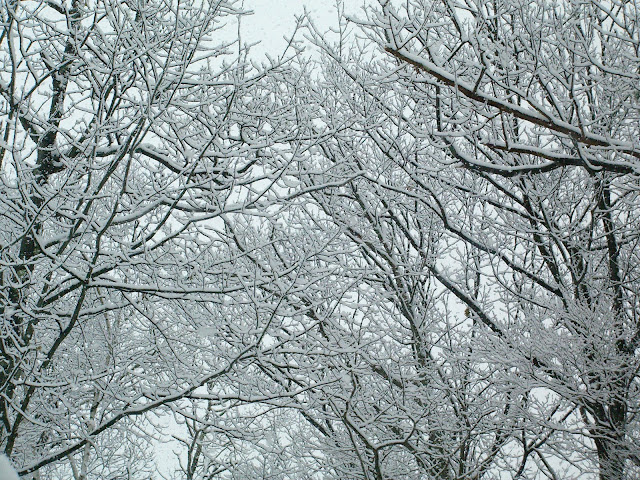 Bare tree branches lined with snow.