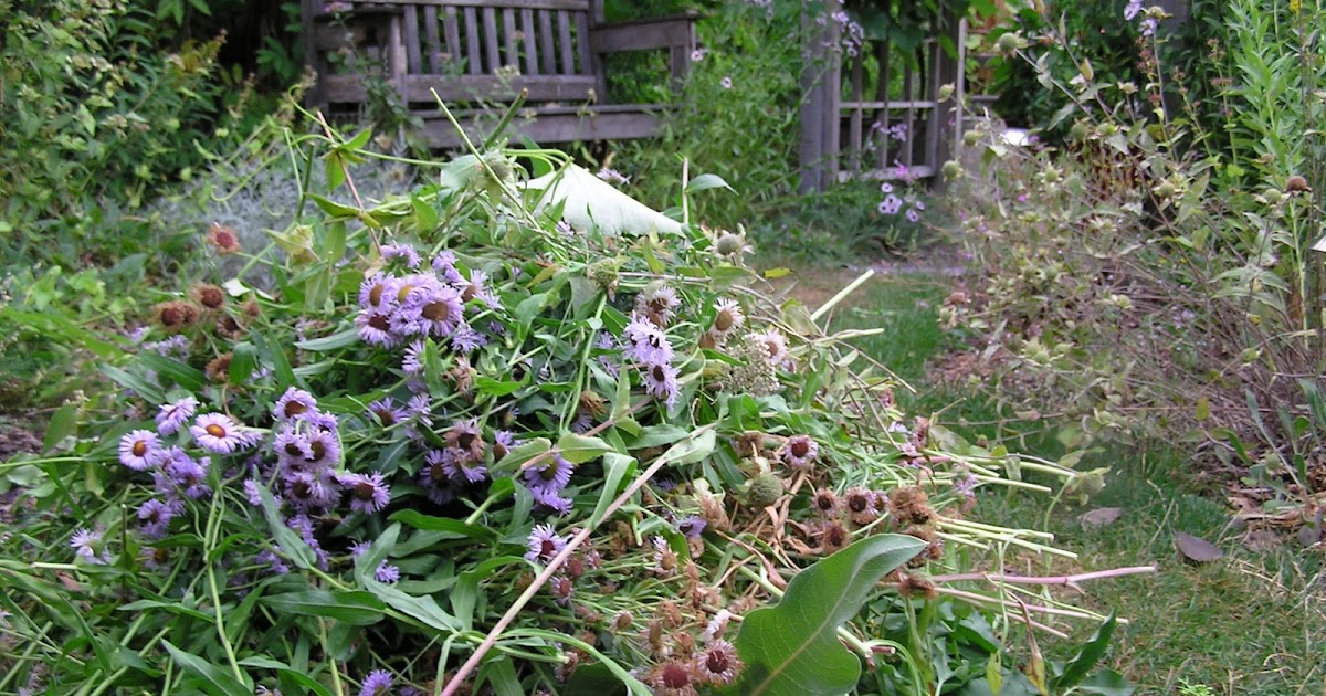 Montana wildlife gardener even native plant gardens need for Plants that require no maintenance
