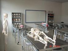 Laboratório de Anatomia - Vértice - Matipó