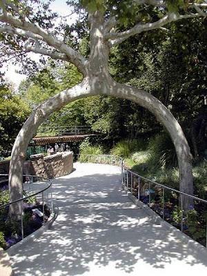 strange and funny trees 18 Pohon Aneh Yang Tumbuh Di Tempat Aneh