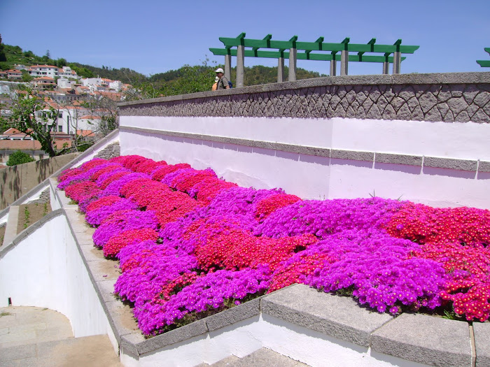 MIRADOURO E AS SUAS FLORES