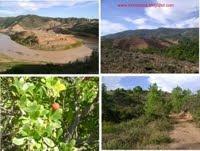 Os caminhos da serra de Monchique. clique em cima das imagens!