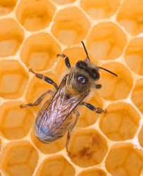 Who Is Killing the Honey Bees and Us in the Process?