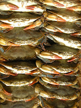 Soft shells