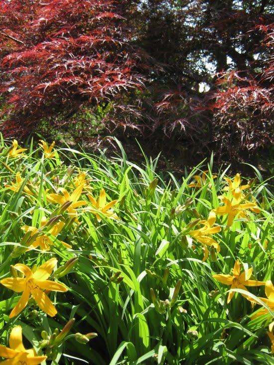 Meadowmist daylily photo