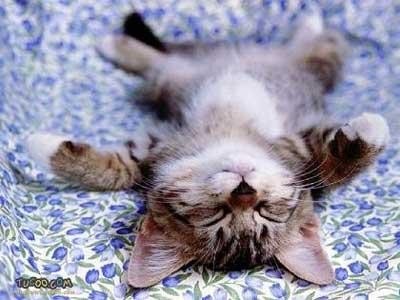 [kitten+lying+down]