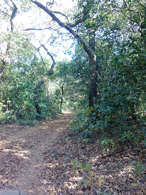 Phansad Wildlife Sanctuary - jungle