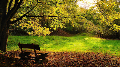 Empty Wooden Bench Yellow Leaves Fall HD Wallpaper