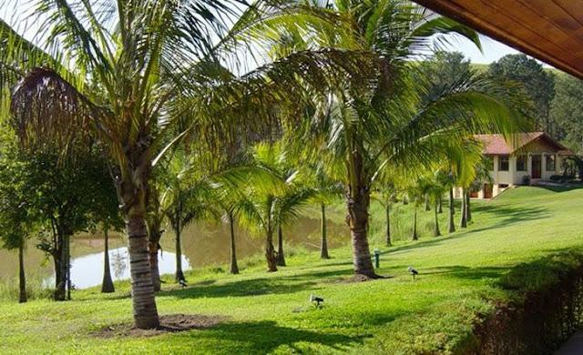 Paque con palmeras de una casa rural en fazenda de Rondonia, Brasil