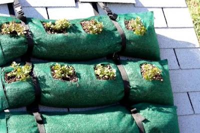 Sistema para techos verdes