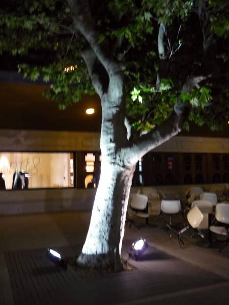 Árbol con focos de iluminación
