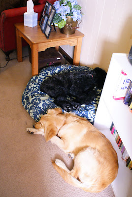 Bishop curls up on dog bed, while Victoria contents herself with laying beside it