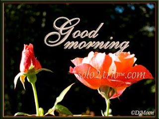 Latest Good Morning Pictures Images Wallpapers Free