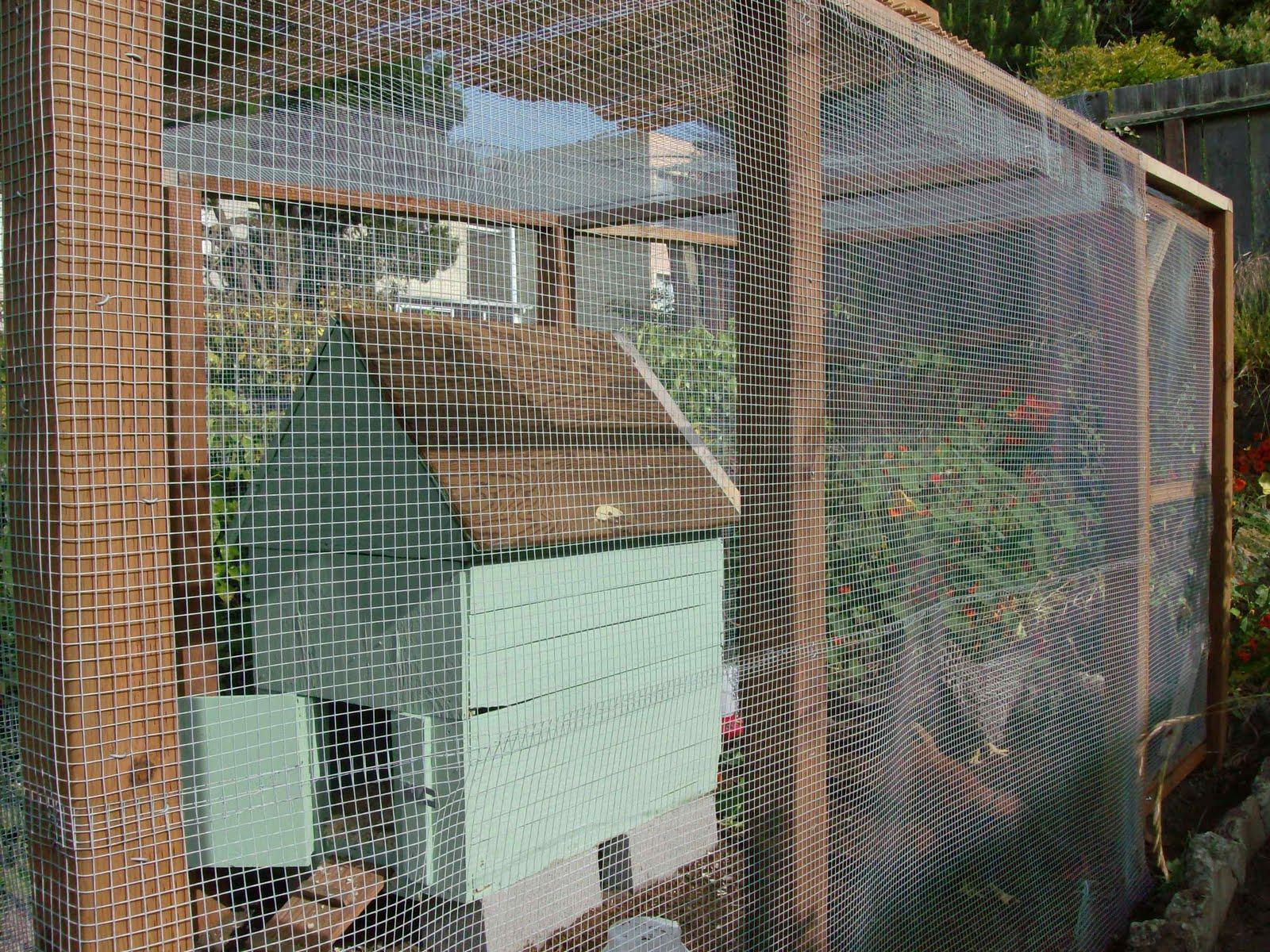 the great backyard chicken adventure part 3 sloat garden center