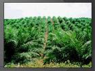 Lowongan Kerja PT. Bumitama Gunajaya Agro Kalimantan Selatan