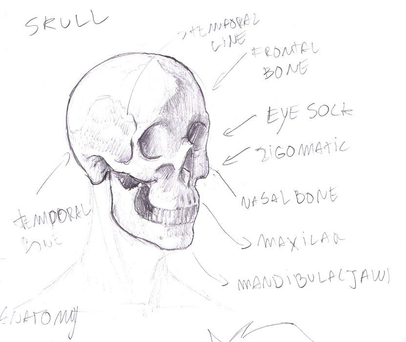 Tony Neto Sketchbook Estudo%2Banatomia