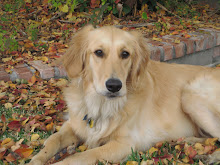 Dixie in the fall leaves.