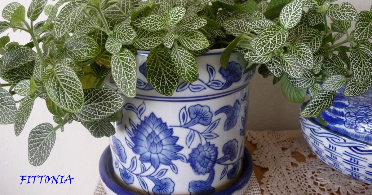 My household capers gardening not so easy care indoor for Easy care large indoor plants