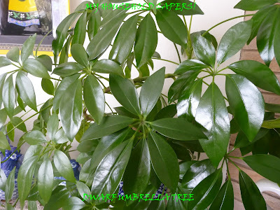 My household capers!: GARDENING: EASY CARE INDOOR PLANTS ...