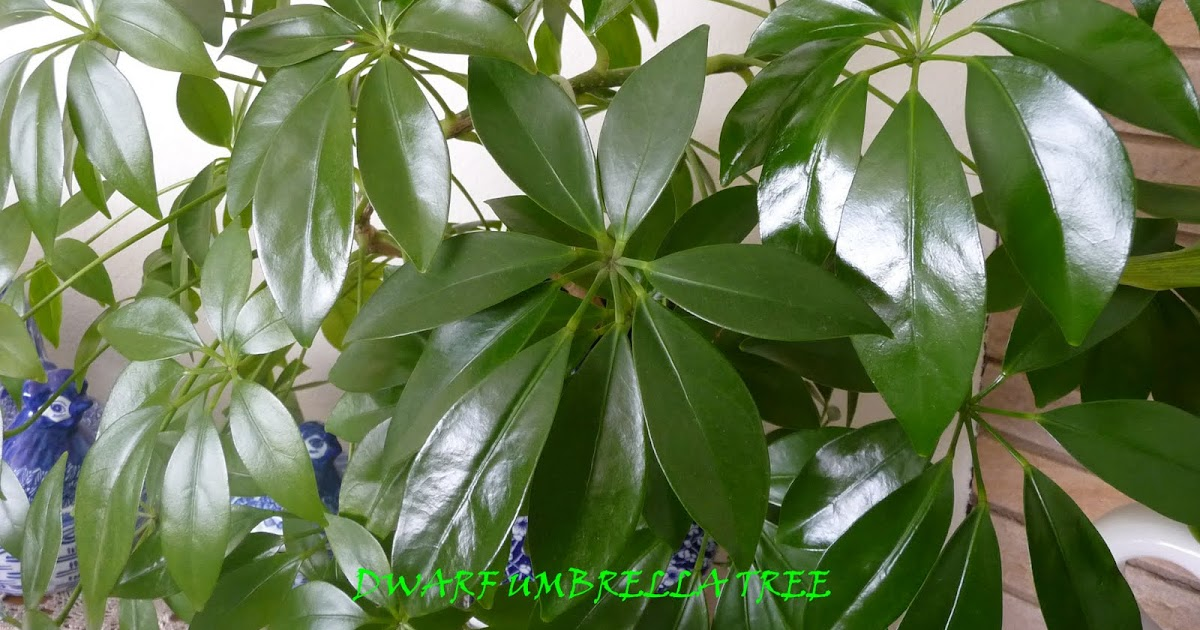 My household capers gardening easy care indoor plants for Maintenance of indoor plants