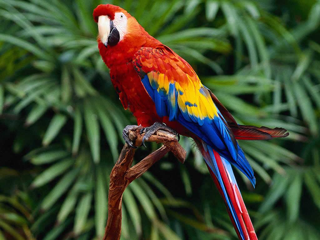 the stories la tells the parrot an english folktale