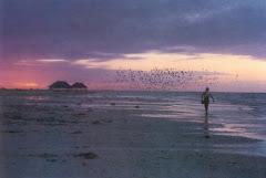 playas isleñas de la perla del golfo