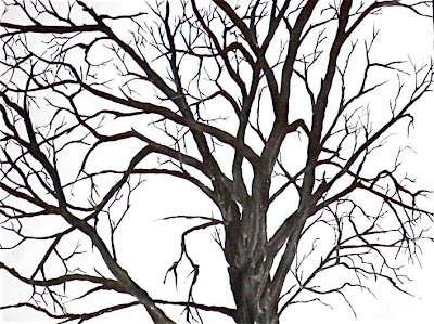 Ink drawing of a bare tree