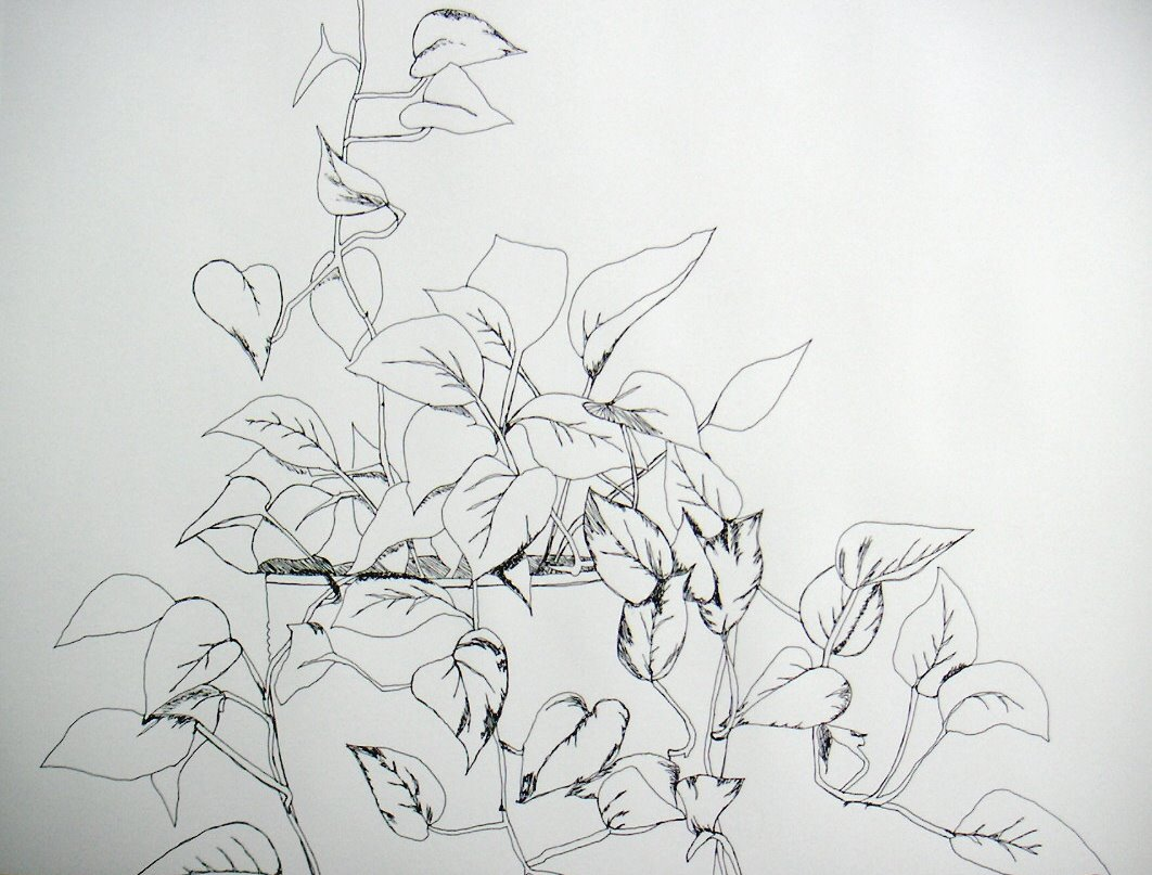 Contour Line Drawing Plant : It s about art and design continuous line drawing of a