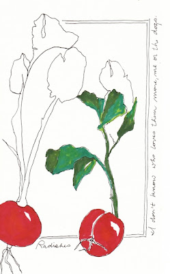 ink drawing radish