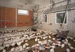 campana para pollos
