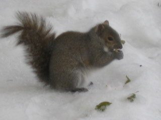One more squirrel photo