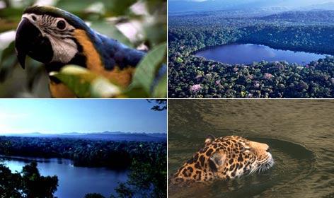 Conhecendo a Amazônia