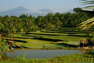 [ricefield+view.JPG]