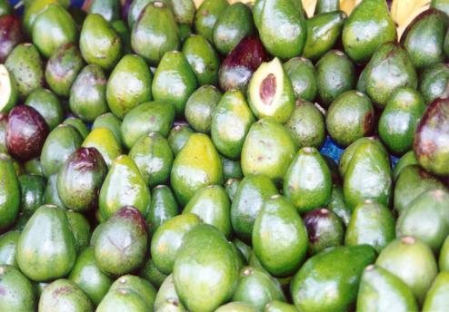 khasiat buah alpukat