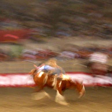 Rodeo Bronco Rider