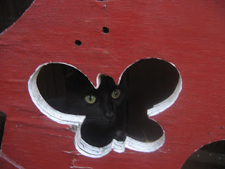 Cat in butterfly face door by Rachel Medanic
